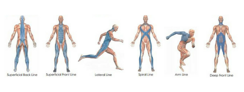 fascia lines anatomy trains