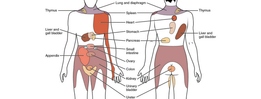pain referred organs