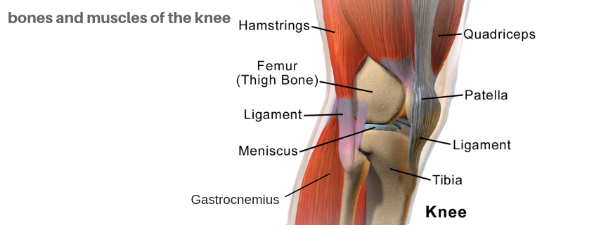 knee pain bones muscles