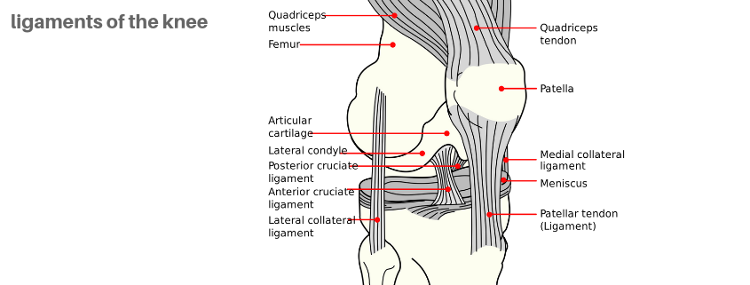 knee pain cruciate collateral ligament