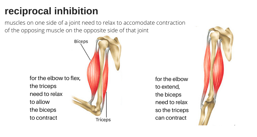 reciprocal inhibition example of bicep and tricep to help weak glutes